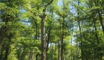 bosque-forestal-chile