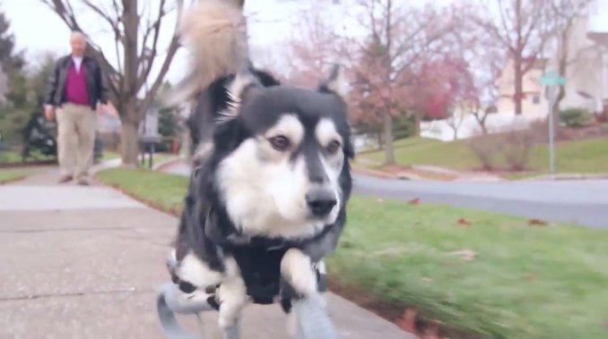 perro-vuelve-a-correr-por-impresora-3d