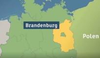 brandenburgo-alemania-porcina-africana