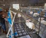 dictadura-comunista-china-asesina-animales-estudio-origen-covid